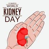Ημέρα παγκόσμιων νεφρών Στοκ Εικόνες