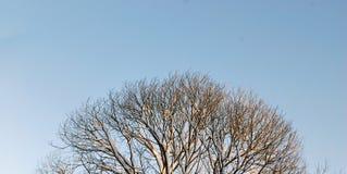 ημέρα παγωμένη Στοκ φωτογραφία με δικαίωμα ελεύθερης χρήσης