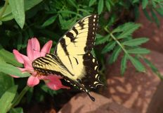 ημέρα πεταλούδων που απο&l Στοκ Φωτογραφίες