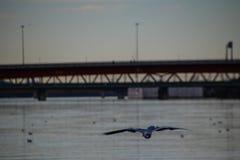 Ημέρα πτήσης στο Δούναβη στη Βιέννη Στοκ Εικόνες