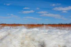 Ημέρα του όμορφου ηλιόλουστου χειμώνα στο έλος σκεπάρνι-Zim με τρία στρώματα - χιόνι, κόκκινοι κλάδοι από το θάμνο, και ζωηροί μπ στοκ εικόνα