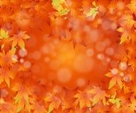 ημέρα των ευχαριστιών έννοιας Στοκ Φωτογραφίες