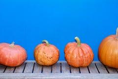 Ημέρα των ευχαριστιών, αποκριές ή σχέδιο λαχανικών με το διάστημα αντιγράφων Ζωηρόχρωμο μπλε υπόβαθρο με πορτοκαλιές κολοκύθες στοκ φωτογραφία