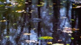 ημέρα φθινοπώρου βροχερή Πτώση πτώσεων σε μια λακκούβα, που καταβρέχει και που δημιουργεί τους κυματισμούς Έννοια πτώσης απόθεμα βίντεο