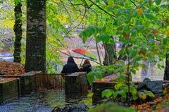 ημέρα φθινοπώρου βροχερή Στοκ εικόνα με δικαίωμα ελεύθερης χρήσης