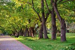 ημέρα φθινοπώρου ηλιόλουστη Διάβαση πεζών φθινοπώρου στο πάρκο Στοκ Φωτογραφία