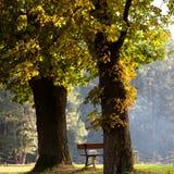 ημέρα φθινοπώρου ηλιόλου& στοκ εικόνες