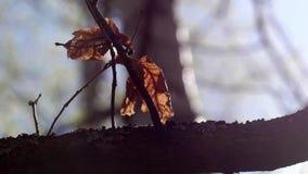 Ημέρα φθινοπώρου σε Kharkov Νεκρά φύλλα που ταλαντεύονται στον αέρα απόθεμα βίντεο