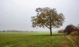 Ημέρα φθινοπώρου στη Γερμανία, μόνο δέντρο που στέκεται στον τομέα, μουντός ουρανός στοκ εικόνες με δικαίωμα ελεύθερης χρήσης