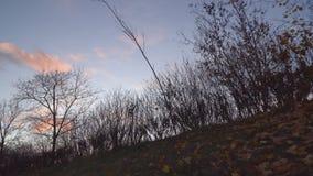 Ημέρα φθινοπώρου στο πάρκο πόλεων απόθεμα βίντεο