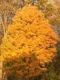 Ημέρα φθινοπώρου στοκ φωτογραφία