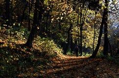 ημέρα φθινοπώρου Στοκ Εικόνες
