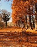 Ημέρα φθινοπώρου Senic Στοκ Φωτογραφίες
