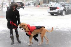 Ημέρα χιονιού πόλεων της Νέας Υόρκης Στοκ εικόνες με δικαίωμα ελεύθερης χρήσης