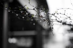 ημέρες βροχερές Στοκ εικόνες με δικαίωμα ελεύθερης χρήσης