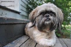 Ημέρες σκυλιών Στοκ Φωτογραφίες