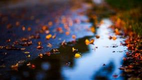 Ημέρες φθινοπώρου στοκ εικόνες με δικαίωμα ελεύθερης χρήσης