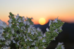 ΗΜΕΡΑ ΝΥΧΤΑΣ ηλιοβασιλέματος φύσης λουλουδιών Στοκ φωτογραφίες με δικαίωμα ελεύθερης χρήσης