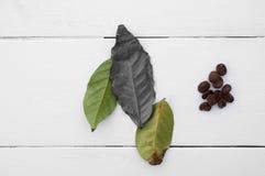 δημιουργικός Τα φύλλα και τα φασόλια καφέ σε ένα λευκό στοκ εικόνες με δικαίωμα ελεύθερης χρήσης