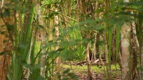 Ημιπαχιά δασική περιοχή φιλμ μικρού μήκους