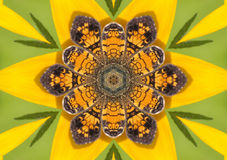 ημισεληνοειδές kaleidoscopic μαργ&alp Στοκ Φωτογραφίες