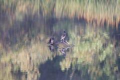 ηξών Περιφερειακό πάρκο Riverfront, χώρα κρασιού Sonoma, Καλιφόρνια στοκ εικόνα