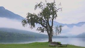 Ηρεμία της λίμνης Bohinj, όμορφο πανοραμικό τοπίο από το σλοβένικο εθνικό πάρκο Triglav απόθεμα βίντεο