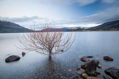 Ηρεμία 02 πρωινού λιμνών Στοκ Φωτογραφίες
