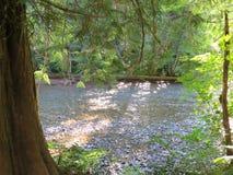 Ηρεμώντας την πράσινη κοίτη του ποταμού στο υποστήριγμα πιό βροχερό Στοκ Φωτογραφίες