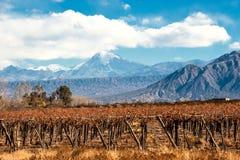 Ηφαίστειο Aconcagua και αμπελώνας, αργεντινή επαρχία Mendoza Στοκ Φωτογραφία