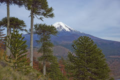 Ηφαίστειο Llaima στο εθνικό πάρκο Conguillio, Χιλή Στοκ φωτογραφίες με δικαίωμα ελεύθερης χρήσης
