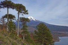 Ηφαίστειο Llaima στο εθνικό πάρκο Conguillio, Χιλή Στοκ Εικόνα
