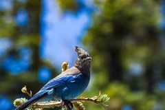 Ηφαιστειακή άγρια φύση Lassen Στοκ Φωτογραφίες