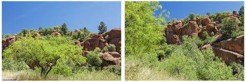 Ηφαιστειακό κολάζ δέντρων mesquite ερήμων φυσικό Στοκ Εικόνα