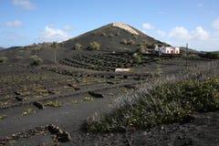 Ηφαιστειακό τοπίο στο νησί Lanzarote, Ισπανία στοκ φωτογραφία με δικαίωμα ελεύθερης χρήσης