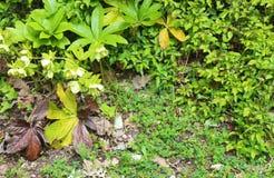 Η άγρια φύση συναρπάζει τη ζούγκλα στοκ φωτογραφία