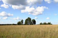 Η άκρη του δάσους στον τομέα με το μπλε ουρανό Στοκ εικόνες με δικαίωμα ελεύθερης χρήσης