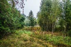 Η άκρη του δάσους το misty πρωί Στοκ Φωτογραφίες