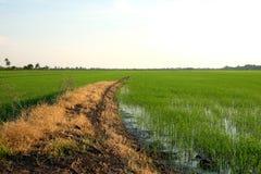 Η άκρη του τομέα ρυζιού Στοκ Εικόνες