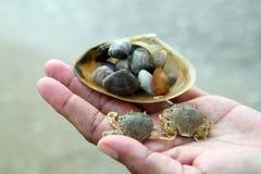 Η άμμος και το καβούρι υποβάθρου στην παραλία της Ταϊλάνδης έχουν φυσικό Στοκ εικόνα με δικαίωμα ελεύθερης χρήσης