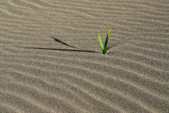 η άμμος Στοκ Φωτογραφίες