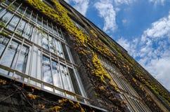 Η άμπελος κάλυψε το ιστορικό κτήριο με τα σύννεφα στοκ εικόνες