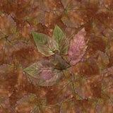Η άνευ ραφής σύσταση σχεδίων υποβάθρου των φύλλων μούρων πετρών έθεσε 1 Στοκ φωτογραφία με δικαίωμα ελεύθερης χρήσης