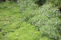η άνθηση flowerbeds στο χρόνο άνοιξη πάρκων στοκ εικόνες