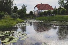 Η άνθιση κρίνων νερού λιμνών Στοκ εικόνα με δικαίωμα ελεύθερης χρήσης