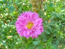Η άνθιση λουλουδιών Στοκ Εικόνες