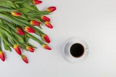 Η άνοιξη ανθίζει τις τουλίπες και το φλιτζάνι του καφέ στο άσπρο υπόβαθρο στοκ εικόνα