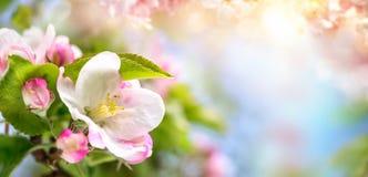 Η άνοιξη ανθίζει υπόβαθρο στα όμορφα χρώματα στοκ φωτογραφία με δικαίωμα ελεύθερης χρήσης