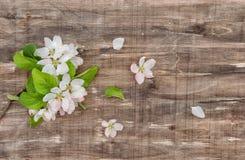 Η άνοιξη ανθών δέντρων της Apple ανθίζει το αγροτικό ξύλινο υπόβαθρο Στοκ Φωτογραφίες