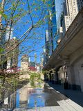 Η άνοιξη είναι ανθίζοντας στο Σικάγο Riverwalk, που απεικονίζεται στη λακκούβα ενός μαξιλαριού παφλασμών στοκ εικόνα με δικαίωμα ελεύθερης χρήσης